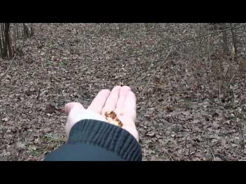 Испанский иглистый тритон Василиса ест червяка (продолжение)