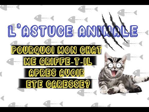 L'Astuce Animale  : Pourquoi mon chat me griffe-t-il après une caresse?