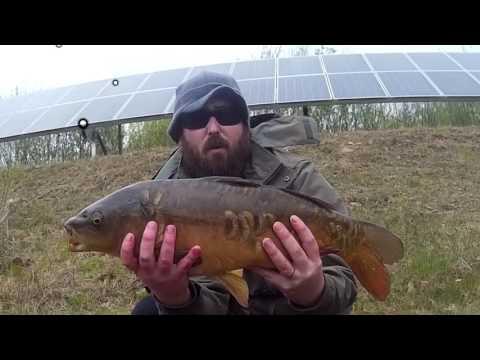 Dave's Carp At Gowerton 2017