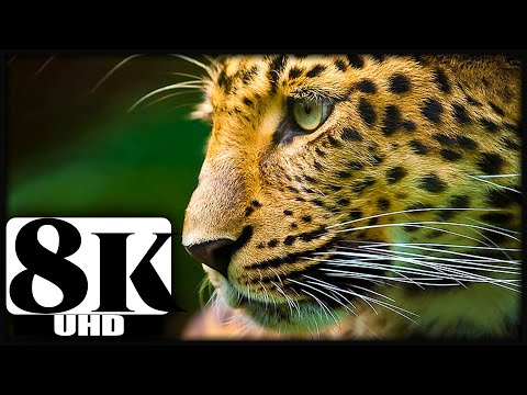 8K VIDEO ULTRAHD | 8K VIDEOS Collection of Wildlife Animals for 8k hdr tv | 8K 120FPS