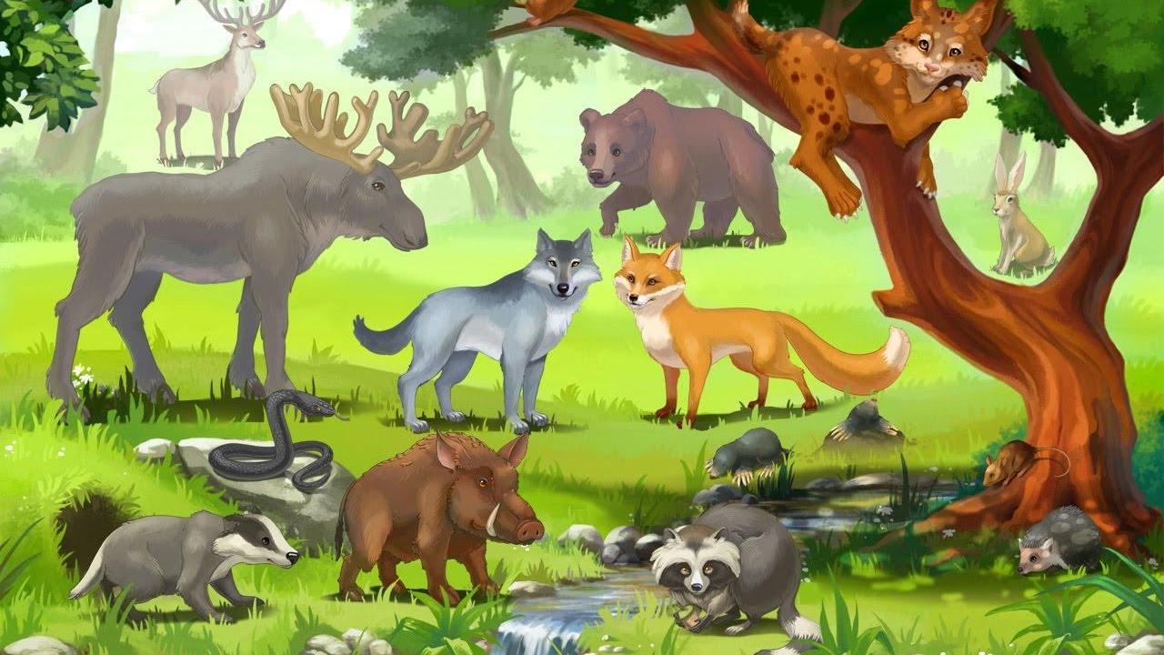 Дикие животные для детей, животные леса, развивающее видео ...