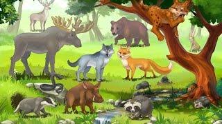 Дикие животные для детей, животные леса, развивающее видео для детей