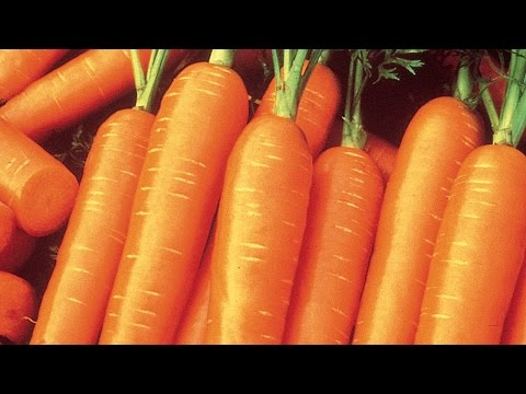 Download Youtube: How to Plant and Grow Carrots