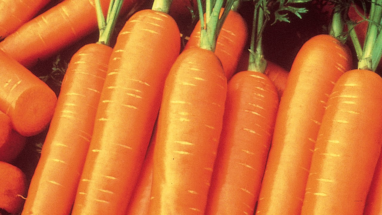 How to Plant and Grow Carrots YouTube