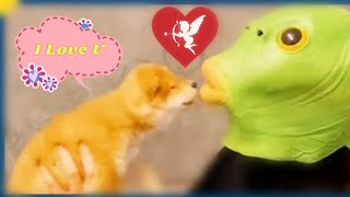 Funny humor  Cute Dogs  Cats,try not to laugh 2021 Funny animal videos 。
