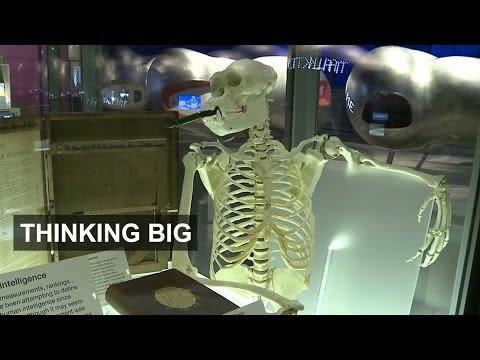 Human evolution's creative drive