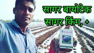 वि. सागर बायोटेक तरबूज सागर किंग, सागर किंग प्लस,Ad- Sagar Biotech Sagar King, Plus watermelon