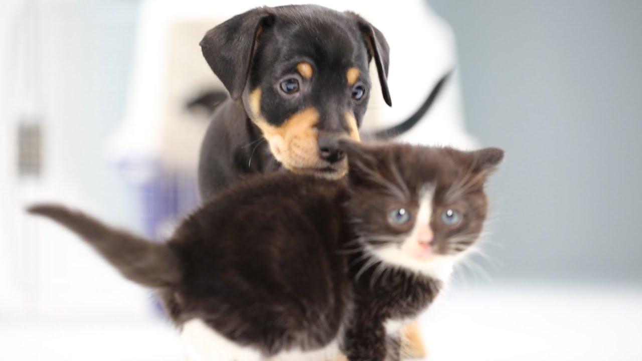 kittens meet puppies for