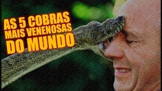 As 5 cobras mais venenosas do mundo - Diário do Curioso