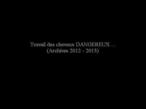 TRAVAIL des CHEVAUX DANGEREUX - Marie Hélène GODBERT - www.theatre-equestre-de-picardie fr©