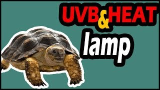 UVB and Heat Lamp for Turtles (Everything You Should Need)