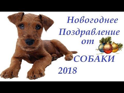 НОВОГОДНЕЕ ПОЗДРАВЛЕНИЕ ОТ СОБАКИ. 2018 - Простые вкусные домашние видео рецепты блюд