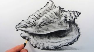 How to Draw a Realistic Shell: Pencil Drawing