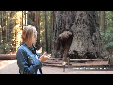 video:Visit the Redwoods of Santa Cruz Mountains