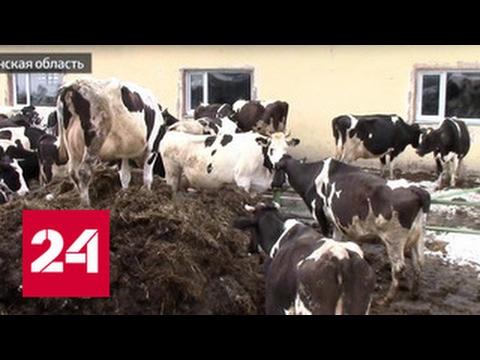Ни денег, ни фермы: на Сахалине пропали 2 миллиарда рублей