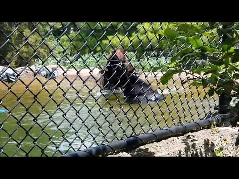 Zoo America From Hershey Park - Vlogging # 236
