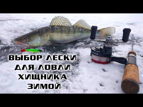 Какую леску ставить для ловли хищника зимой / Азбука зимней рыбалки.