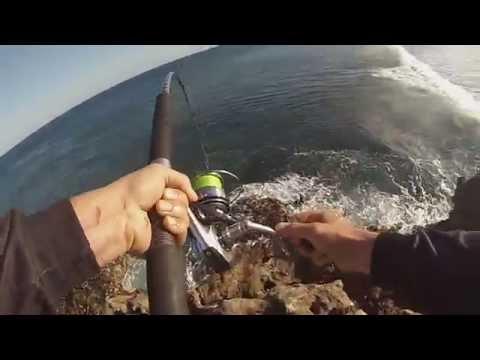Dirk hartog island Fishing  Baldchin grouper off  the rocks