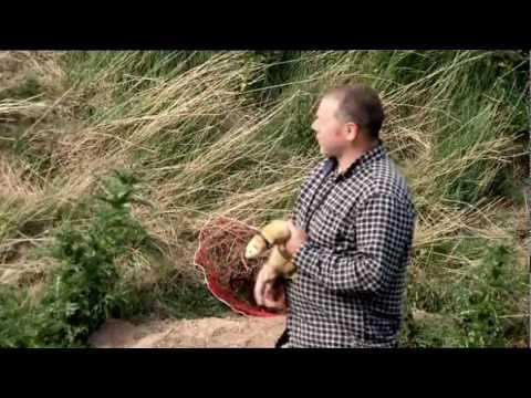 Ferreting in Norfolk