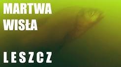 Kamera podwodna - Martwa Wisła - Leszcze