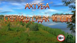 Русская Рыбалка 4 Ахтуба Стерлядь Судак Сом
