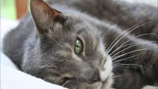 видео картинки котики