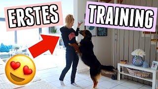 Hunde Tricks lernen mit Maja: Das kann sie schon alles! - Vlog 114