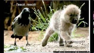 Смешные животные,приколы с животными
