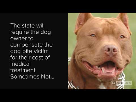 oakland-dog-bite-lawyer-for-postal-carriers:-personal-injury-attorney