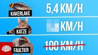 Wie schnell ist ein Faultier? So schnell sind diese Tiere