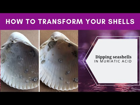 Using muriatic acid to clean seashells