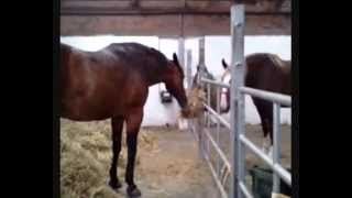 Home Farm - Croxteth Park