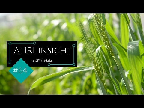 AHRI insight #64: How stuff works: 2,4-D, free radicals and monkeys
