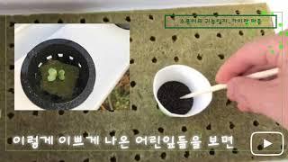 소용이의 귀농일지_카이란파종/수경재배