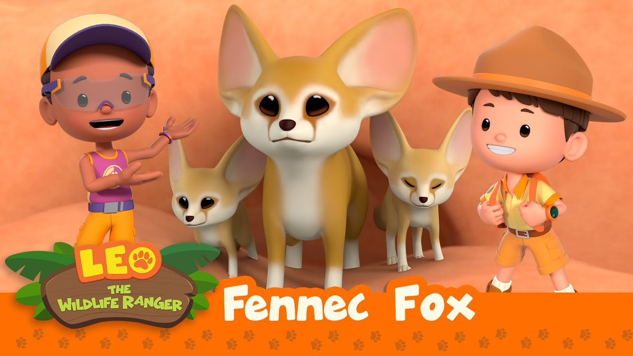 Fennec Fox   Is That A Real-Life Pokemon?!?   Leo the Wildlife Ranger   Animation for Kids