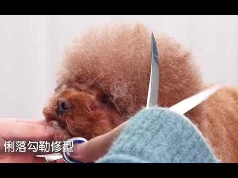 台灣現貨+開箱影片🔥寵物美容 剪刀 寵物剪 寵物 剪毛器 寵物 剪刀 修毛 寵物 剃毛器 剪毛 剃刀