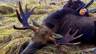 Охота на трофейного лося в Смоленской области