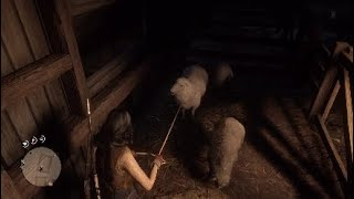 RDR2 Sheep can't believe it's eyes
