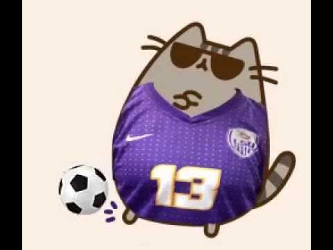 Guy Sports Youtube Cat