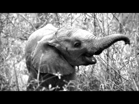 Be Svendsen - The Elephant's Cage (Mollono.Bass Remix)