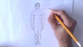 Уроки рисования. Пропорции фигуры человека .Как рисовать ЧЕЛОВЕКА(Как нарисовать человека ▻ Скачайте видео урок