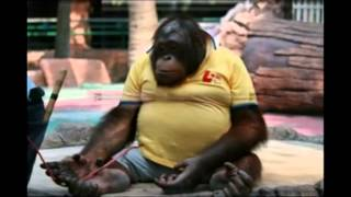 Смешные животные  Смешные обезьяны  Приколы  funny monkey