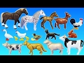 Playmobil Farm Animals Toys Collection For Kids - Learn Animals Names Video