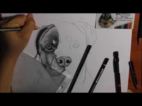 ROTTWEILER - Pet Portrait Artist | Ritratti a 4 zampe