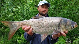 ТОЛСТОЛОБ ВЕСНОЙ ЛОВЛЯ ТОЛСТОЛОБА НА ТЕХНОПЛАНКТОН рыбалка на толстолобика