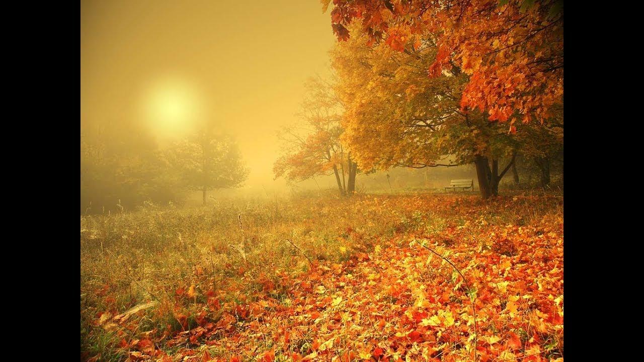 осень в окне фото
