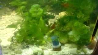 Дешевый самодельный прибор подачи  CО2 в аквариум в действии(Реально работающее дешевое и эффективное устройство подачи СО2 в аквариум. Идея взята здесь http://vitawater.ru/aqua/hy..., 2013-04-10T05:53:12.000Z)