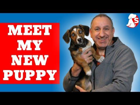 Beagle Puppy Training Basics | Meet My Puppy