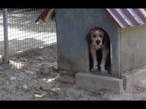 tierheim hamm diese hunde suchen ein neues zuhause doovi. Black Bedroom Furniture Sets. Home Design Ideas
