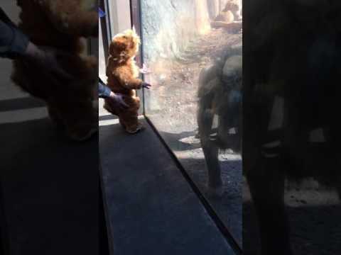Lion Baby Meets His Namesake - Part 3